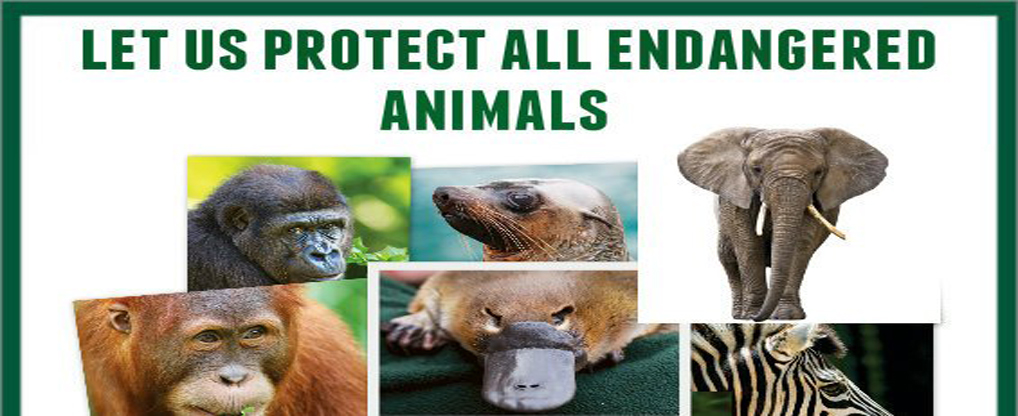 Top 5 Organizations working to Protect Endangered Species